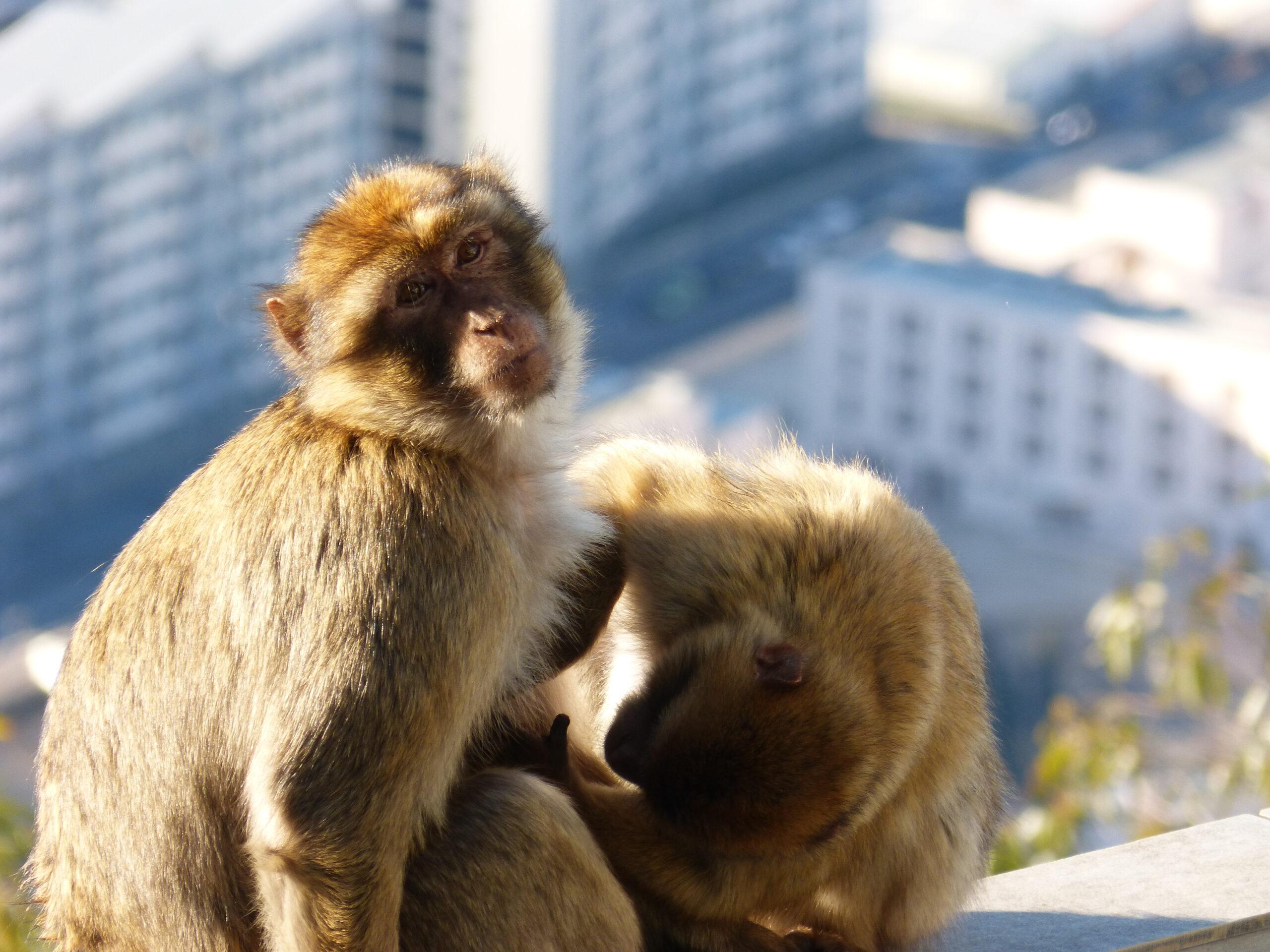 Wycieczka na Gibraltar – porady praktyczne