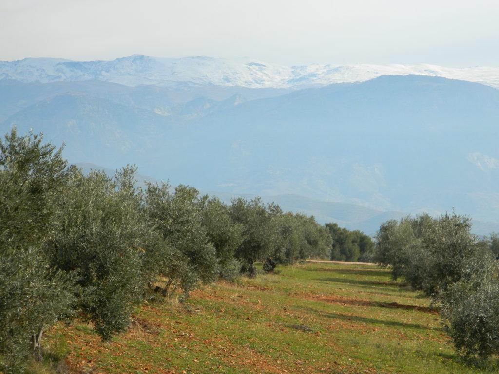 Granada - Andaluzja