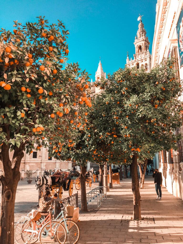 Sewilla, pogoda, pogoda w Andaluzji, pomarańcze w Sewilli,
